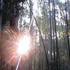 【2011】京都旅行記 嵯峨野の混雑は半端ない【観光】