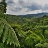 「ワイマング火山渓谷」(Waimangu volcanic valley)~シダの葉が茂る散策路へ。。。