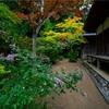 奈良・忍辱山町 - 萩の花咲く圓成寺