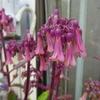 【この花の名は】検索力(けんさくりょく)ノーマル、この花の名前が分からない;;