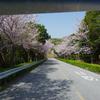 2018.3.29 桜のトンネル