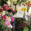 新春を彩る花たち