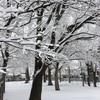 雪が降った松本