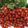 これからしばらくトマトに囲まれた日々が!?〔家庭菜園とそのメリット、ミニトマトライスの作り方〕
