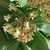 ミルクウィードと家庭菜園/ pollinator garden