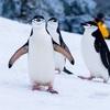 ペンギンが好きな私の4つの夢