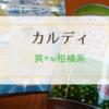 【カルディ】塩レモンソーダやあまなつ酎ハイ、爽やかな柑橘系が気になります!