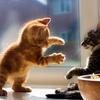 猫は飼い主のことを「でかい猫」だと思っている 自分のことがよくわかっていない猫たち