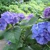 白野江植物公園他散策