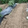 市民菜園で野菜づくりに挑戦!23 〜秋植えの準備