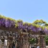 風にそよぐ紫の花