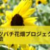 愛知県田原市「伊良湖菜の花ガーデン」 ミツバチとひまわりで地域産業創出「ミツバチ花畑プロジェクト」始動