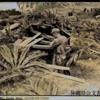 1945年7月4日 『宜名真・辺戸住民斬殺事件』