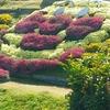 菊にひまわり、コスモス