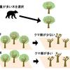 クマの採食と木や森の豊凶