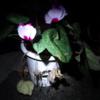 我が家の花、木立の小話