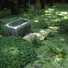 東福寺 オリンパス ペンライト、苔に迫る