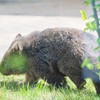 超レア動物「ウォンバット」が見られる五月山動物園のある大阪府池田市の観光PRは何気にぶっ飛んでいる@ウォンバット動画あり