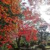 紅葉を観に庭園へ