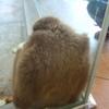 来年の干支のお猿さんを見に 冬の動物園を訪れました。
