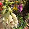 ツリーハウスビルド 天空のドラゴン観測所13 お花なのなっ