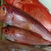 あかねの定番の魚