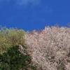 新緑と山桜の里山~京都・八瀬にて~