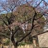 今の上野の桜の様子と子連れ動物園を楽しむポイント