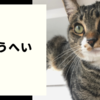 保護猫ショウヘイ