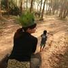 この夏、タイでゾウに乗って森の王様になるのはどうか?