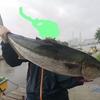 東京湾でブリを釣った🔥!!!【12.5キロ、105cm】