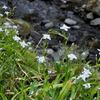 貴船川に沿って花の道を歩く