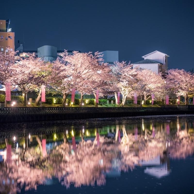 幽玄な夜の灯りに照らされて…京都府 穴場の桜ライトアップ厳選9