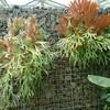 新宿御苑で見た植物⑧ 麋角羊歯(ビカクシダ)