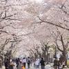 震災10年つれづれ (4)帰還困難区域と隣り合わせの町の誇り。夜ノ森の桜並木へ