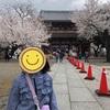 池上本門寺でお花見(2021年春)