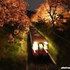 山北の夜桜