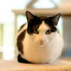 【引っ越し】賃貸物件で「猫の飼育」がダメな理由とそれについて思う事【ペット】