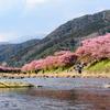 【一眼レフ】懲りずに今年も河津桜を見に行ってきた