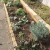 道路沿いの植栽