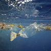 プラスチックゴミを石油に変える夢の技術が話題に、英国ベンチャーが開発