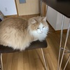 私の椅子にいつも♫