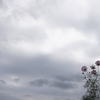 【29】『力』宮本輝著 『五千回の生死』に収録