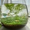 """メダカの水槽づくりは「箱庭療法」そのもの。""""自己生成する""""箱庭に癒やされる。"""