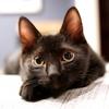 黒猫って人気があるの?ないの?なぜ地域によって評価が分かれるのか不思議な被毛!
