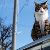 猫は何で高いところから降りるのが苦手なの?