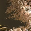 桜と花見と桜ソング