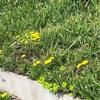 実家の庭があまりにヒドすぎるので、草たちを駆逐するためにリフォーム。