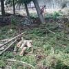 薪ストーブ始生代94 杉の林で薪集め、完結。そして薪棚を満タンに