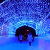 十和田湖冬物語2019 見どころとアクセス方法
